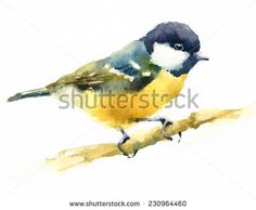 Watercolor Bird Tit On Branch Hand Painted Illustration on white background