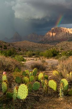 I promise, everyday is this magical here. Rain or Shine. - Zion National Park, Utah, Watchman Rainbow Photo Credit: Seth Hamel