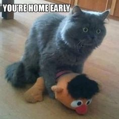 You're home early. Totally innappropriate but hysterical.