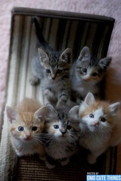 """Miracles in velvet mittens; tumbled here a pile of kittens."" --Jo Kittinger"