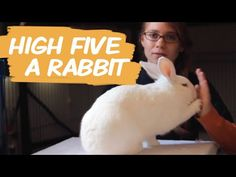Rabbits are intelligent pets, and they can be trained to perform tricks. Training is a fun way to spend time with your furry friend and bond with them.