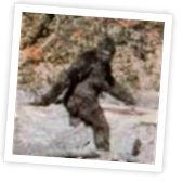 Most famous picture of Big Foot, although it was a hoax.