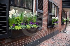 window boxes with spring flowers in the Boston neighborhood of Beacon ...