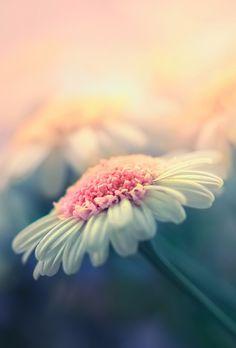 Bokeh photography Flower