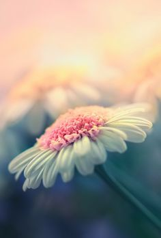 Bokeh photography Flower