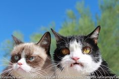 The Daily Grump | September 25, 2013 Grumpy with Pokey showing vampire kitti fangs