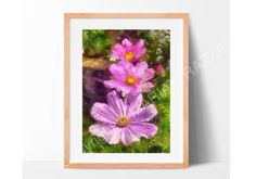 Pink flower cosmos print sizes 7x5 or 8x10.  From my by Artsandus