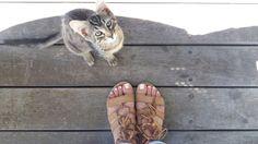 Kitty cat, cat, pet