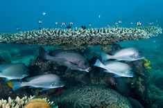 Diversity Abounds: Study suggests the Western Indian Ocean is home to Second Most Diverse Coral Reefs in the World