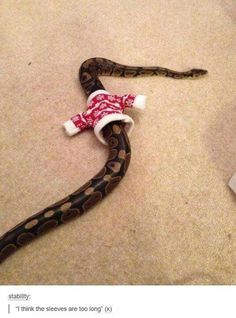 Funny pictures about Tiny Sweater For A Snake. Oh, and cool pics about Tiny Sweater For A Snake. Also, Tiny Sweater For A Snake photos. Cute Reptiles, Reptiles And Amphibians, Animals And Pets, Funny Animals, Cute Animals, Animal Memes, Animals Planet, Animal Humor, Baby Animals