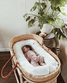 15+ Gorgeous Plants to Use in Your Baby's Nursery #momoozemag #nursery #plants