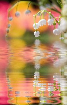 <3<3 lovely flowers over a pond