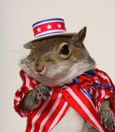 Hi, Sugar Bush Squirrel here.  Thanks for inviting me to pin on your squirrels and chipmunks board!  Don't forget to vote for me for President! www.SugarBushSquirrel.com