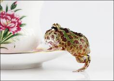 Argentine Horned/Pac-man Frog (Ceratophrys ornata)