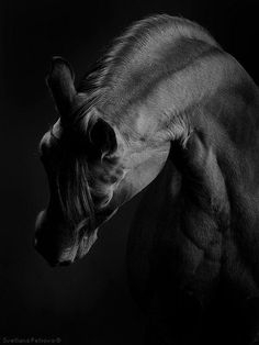 La Cavalière masquée added 265 new photos to the album: Horses in photographies — with Lucrecia Ral and 5 others. Most Beautiful Horses, All The Pretty Horses, Black Horses, Wild Horses, Equine Photography, Animal Photography, Zebras, Friesian Horse, Palomino