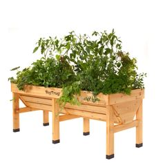 VegTrug Raised Garden Table for fruits, veggies and herbs