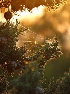 Infinite wonder awaits those who seek it. Beauty, nature, histories and art exist everywhere you. Backyard House, Backyard Landscaping, Spider Art, Spider Webs, Autumn Aesthetic, Backyard Projects, Autumn Garden, Winter Theme, Golden Hour