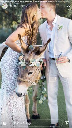 Goats, Wedding, Animals, Valentines Day Weddings, Animales, Animaux, Animal, Weddings, Animais