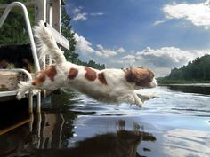The best Cavalier King Charles Spaniel photo I have ever seen from http://www.facebook.com/pages/The-best-pictures-of-the-Cavalier-King/239854999427769   I wish they got the breed name right though :/
