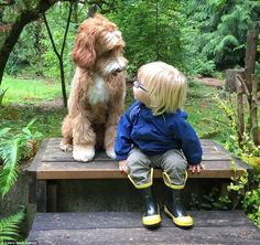 Gazing: Buddy and Reagan go on walks together and take breaks when Buddy gets tired...