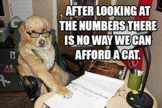 E bine sa ai cunostinte de... contabilitate primara! Nu se stie niciodata cand vei avea nevoie de ele. http://www.eurocor.ro/Un-curs-pentru-un-viitor-mai-sigur---Contabilitate-primara_articol-23.htm?reftid=1&reftlp=1&refsid=73&refbid=C11