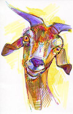 drawing of a goat / dessin d'une chèvre