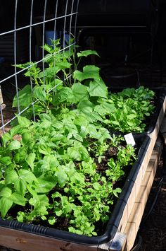 DIY garden! A new design that makes gardening easy. My winter garden... radishes, peas, beans, and collards. blog with plans and lots of pics. ~Mel @ raisedurbangardens.com