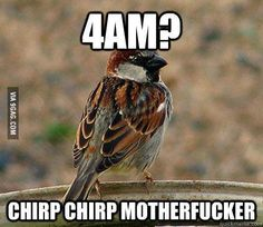 This guy really pissed me off today HAHA, chirp chirp