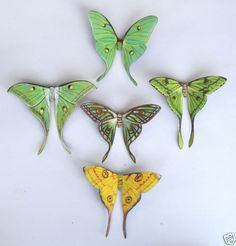 Art - Butterfly Moon Moth Magnets, Wholesale Lot of Insects, Kitchen Magnets Lunar Moth Tattoo, Moon Moth, Moth Wings, Beautiful Butterflies, Beautiful Bugs, Beautiful Life, Etsy, How To Make, Gifts
