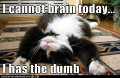 I cannot brain today...  I has the dumb