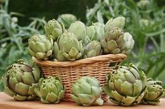 If you love Italian food, grow an Edible Italian Garden to have a fresh supply of tastiest vegetables and herbs. Even if you& short of space, you can grow them in containers! Artichoke Plants, Artichoke Salad, Gemüseanbau In Kübeln, Online Cooking Classes, Plant Background, Italian Garden, Container Gardening Vegetables, Herb Garden, Gardens