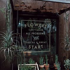 flowers, green, and plants 이미지