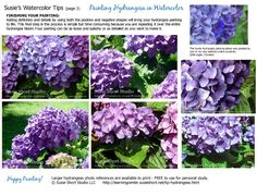 Painting Hydrangess in Watercolor Tips & Tutorials by Susie Short