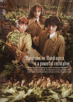 """""""'Mandrake, or Mandragora, is a powerful restorative,' said Hermione, sounding as usual as though she had swallowed the textbook. 'It is used to return people who have been transfigured or cursed, to their original state.'"""""""