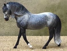 andalusian (one of my favourite breeds)