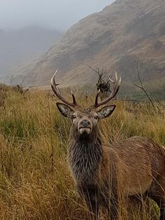 Glen Etive native posing in Scotlands Highlands. Beautiful World, Animals Beautiful, Cute Animals, Northern Lights Scotland, England And Scotland, Glen Etive, Scottish Highlands, Science And Nature, Spirit Animal
