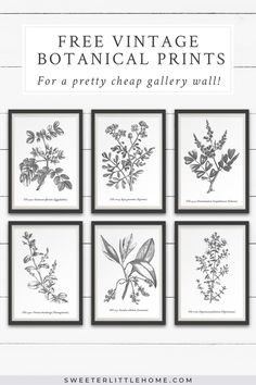 Download this free printable vintage botanical wall art to create a beautiful and cheap gallery wall in your home! These black and white free printables feature botanical illustrations from a 1790 book on medicinal plants and flowers. #freeprintable #freeprintablewallart #freevintageprintables #blackandwhiteprintables #vintageprintables #vintageprintablewallart #botanicalillustrations