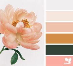 Flora Tones | Design Seeds coral orange blush peach colors pastels