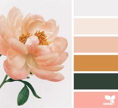 Flora Tones | Design Seeds coral orange blush peach colors pastels