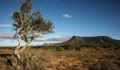 Fracking Karoo South Africa Shell Fracks off.     Is this the end of Karoo Fracking... or a Trojan Horse?