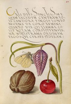 n the 1500s, illuminator Joris Hoefnagel rendered flowers and plants with a botanical precision unmatched in his day. It's tempting to imagine each of Hoefnagel's natural wonders growing in the gardens cultivated at the imperial court of Rudolf II, his patron.