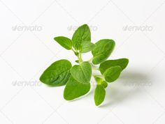 Realistic Graphic DOWNLOAD (.ai, .psd) :: http://sourcecodes.pro/pinterest-itmid-1007000656i.html ... Fresh oregano sprig ...  Studio Shot, closeup, culinary herb, digifoodstock, flavoring, food, fresh, green, herb, ingredient, leaves, oregano, organic, plant, raw, sprigs, white background  ... Realistic Photo Graphic Print Obejct Business Web Elements Illustration Design Templates ... DOWNLOAD :: http://sourcecodes.pro/pinterest-itmid-1007000656i.html