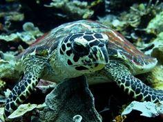 Raja Ampat 2012: Swimming with Ocean Nomads