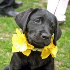 Daffy-Puppy Nantucket