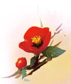 Korea Flower, 동백화 Plants, Plant, Planets