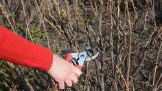 Pruning Shears, Garden Tools, Gardening, Lawn And Garden, Gardening Scissors, Yard Tools, Horticulture