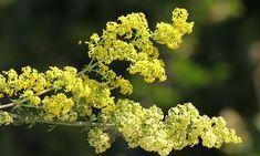 Herbalism, Flora, Herbs, Incense, Medicine, Plant, Herbal Medicine, Plants, Herb