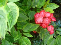 Mon jardin-Ma passion (c) Michelle Zurcher
