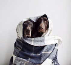 dont be a cold mutt the cold season has arrived so we are bringing you the top tips for how to keep your dog warm in winter from snuggly warm dog jumpers