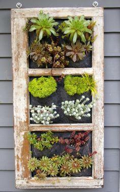 Old window or shutter for vertical garden http://inspirationgreen.com/shutter-reuse.html